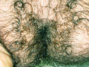 Hairy Iranian Bear