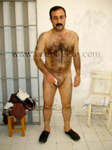 an erotic kurdish daddy with a hairy body like a monkey strips naked